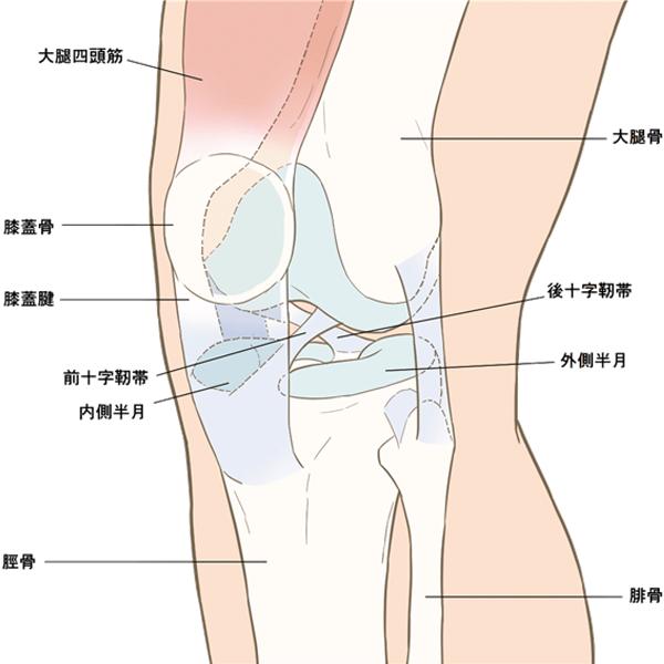変形性膝関節症とは?